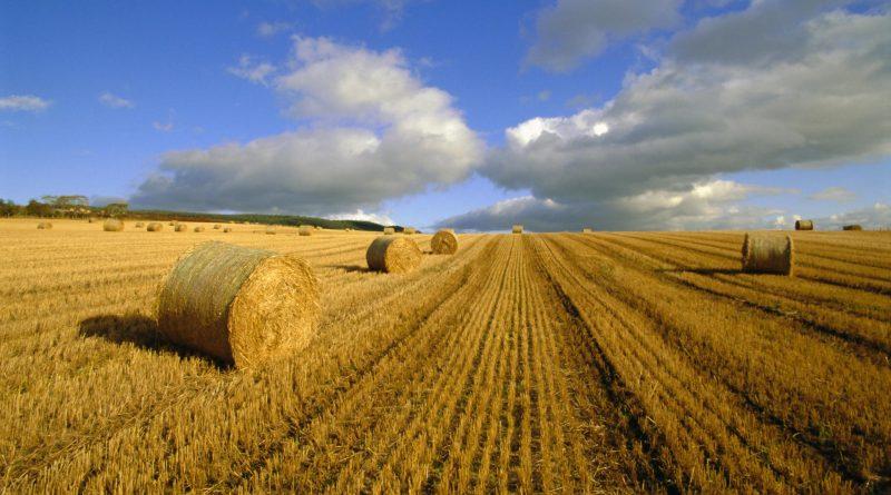 сельхозпроизводство